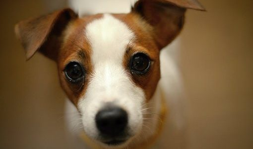 私は犬と一緒に暮らしたい│一人暮らしだと無理なのか…?