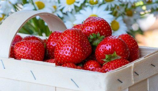 【いちご!苺!イチゴ!】各地ホテルで春のストロベリーフェア開催!