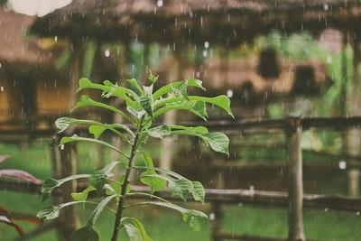 映画「言の葉の庭」感想|雨の日の美しい風景の中で