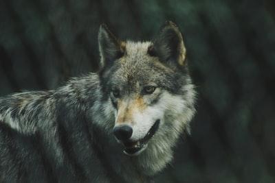 映画「孤狼の血」感想|リアルに描かれたアウトローの世界