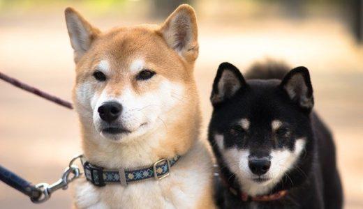 「映画版 柴公園」 ネタバレ感想|柴犬とおっさんの日常