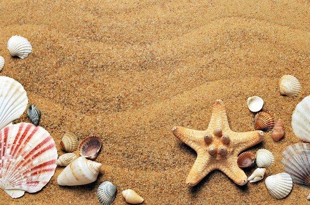 砂浜の貝殻